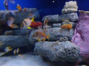 Aquarium 4